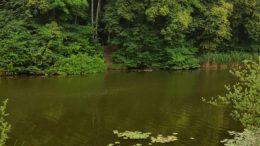 Wasser und Bäume: der Elster-Saale Kanal am Bienitz