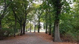 Der Mariannenpark in Schönefeld mit Bäumen und einem Weg dazwischen.