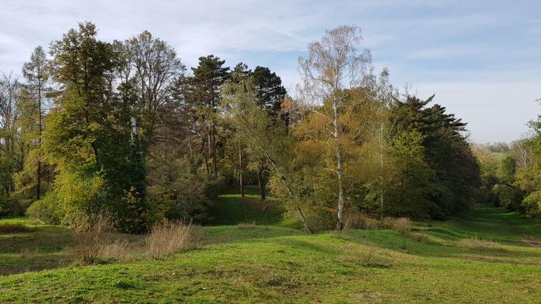 hügelige grüne Wiese mit Bäumen