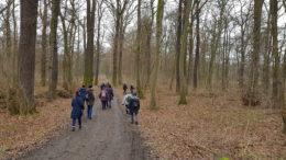 Wanderer auf dem Weg durch den Wald.