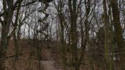 Der Aussichtsturm im Rosental erhebt sich im Hintergrund. Im Vordergrund stehen viele kahle Bäume.