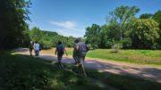 Menschen wandern auf einem Weg im Grünen mit Abstand zueinander.
